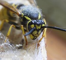 Wasp in a Spider's Web by grandaded