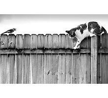 Scat Cat! Photographic Print