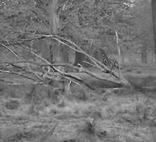 Dunham Deer.. by NaturesTouch