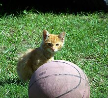 basketball anyone?? by tomcat2170