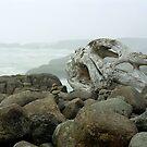 Oregon Driftwood by paula whatley