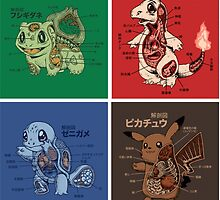 pokemon starters anatomy by pokemonmaster89