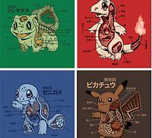 pokemon starters anatomy by pokemonmaster89
