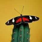butterfly 1 by Els Steutel