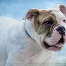 Beautiful Bull dog by vigor