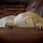 I have to sleep now... by Melinda Kerr