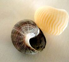 Salt n' Pepper (More shells!) ^ by ctheworld