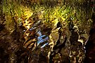 Ripples, reeds, reflections by Louise Cooke