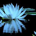 Ripples...Black Ponds..Waldport, Oregon by trueblvr