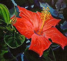 hibiscus by mehranmusic