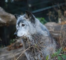 You Are The (Wolfs)Bane of My Existence by brianalynnese