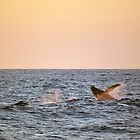 Two young humpbacks by Peter Hall