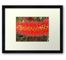 A Rush in the Brush Framed Print