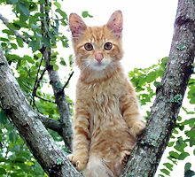 kitty up a tree by tomcat2170