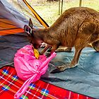 """""""Listen mate, get outa our tent"""" - Kangaroo by indiafrank"""