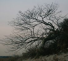 Bent Tree by Rpnzle