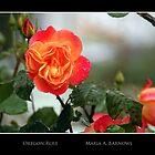 Oregon Rose - Cool Stuff by Maria A. Barnowl