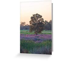 Tree surounded by Pattersons curse purple weed  Greeting Card