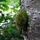 Tree Growth by David Mann