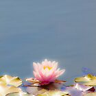 waterlily, nenúfar by terezadelpilar~ art & architecture
