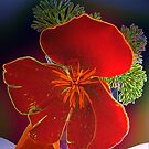 Poppies in Blue Vase by ©   Elaine van Dyk