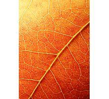 Autumn Foliage Photographic Print