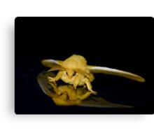 Io moth Canvas Print
