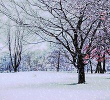 Winter Trees by LudaNayvelt