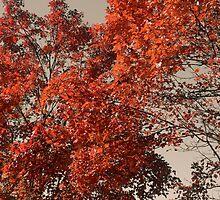 Fall by Ryan Deis