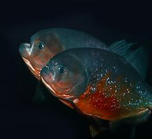 Piranha Brothers by christopherliao