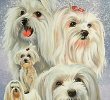 Maltese Collage by BarbBarcikKeith