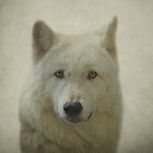 Gray Wolf by Sandy Keeton