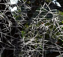 Web in Trees by Leah Hislop