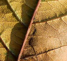 autumn leaf by peterwey