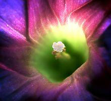 The Inner Light (2) by robkal