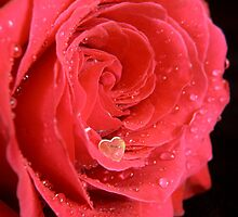A Heart in a Rose by Martie Venter