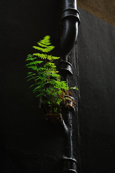 Urban Foliage by Jonathan Russell