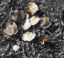 Black and White colorized leaves by Reflections