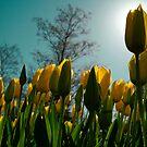 follow the sun by Jaye Heraud