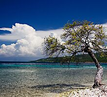Beachside Tree by morealtitude