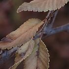 Fall leaves (1) by dfrahm
