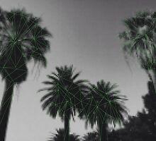 Palm trees by Daria Finn