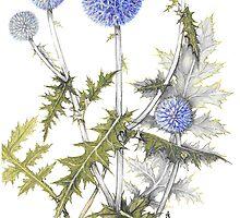 Globe Thistle - Echinops ruthenicus by Sue Abonyi