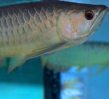 Like a Fish in Water - Kuala Lumpur, Malaysia. by Tiffany Lenoir