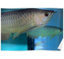 Like a Fish in Water - Kuala Lumpur, Malaysia. Poster