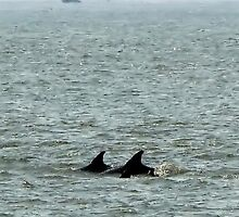 Dolphins of Cape May by AnneRN