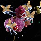 Fairies on Orchid by mikeloughlin
