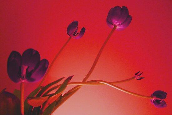 Stems & Stamens by Carmen  Cilliers