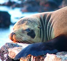 its a seals life by mickeyb