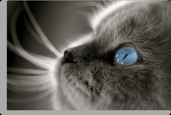 Blue Gaze by Douzy